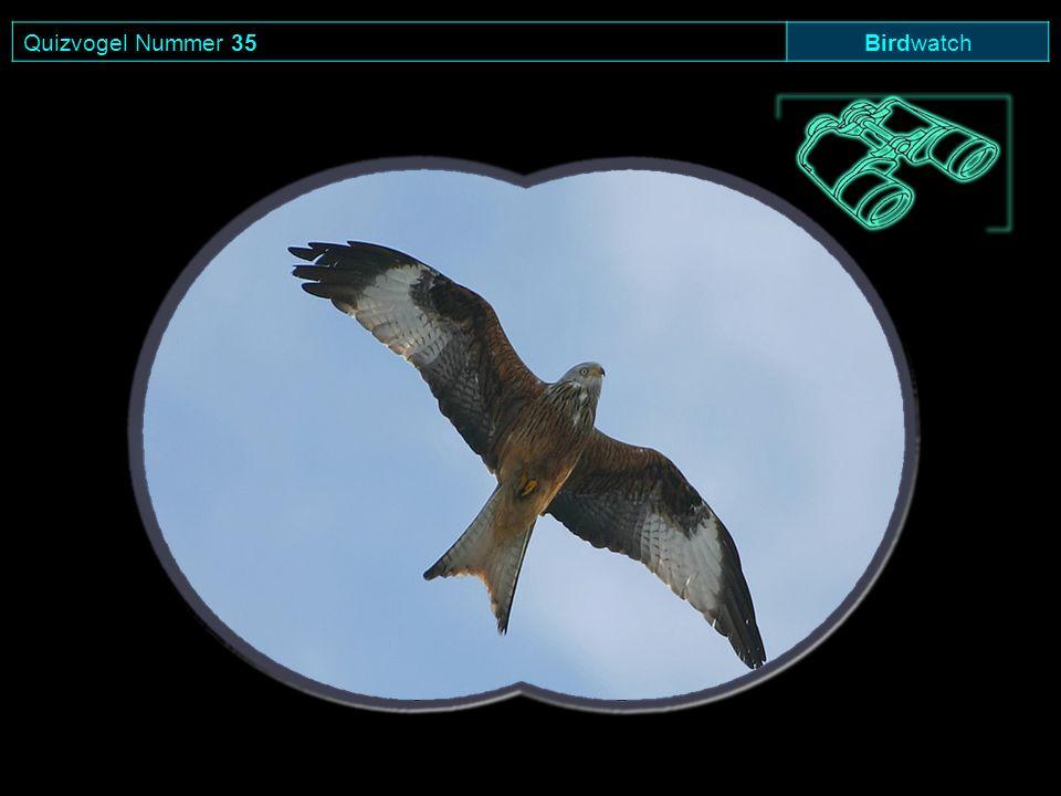 Quizvogel Nummer 35 Birdwatch