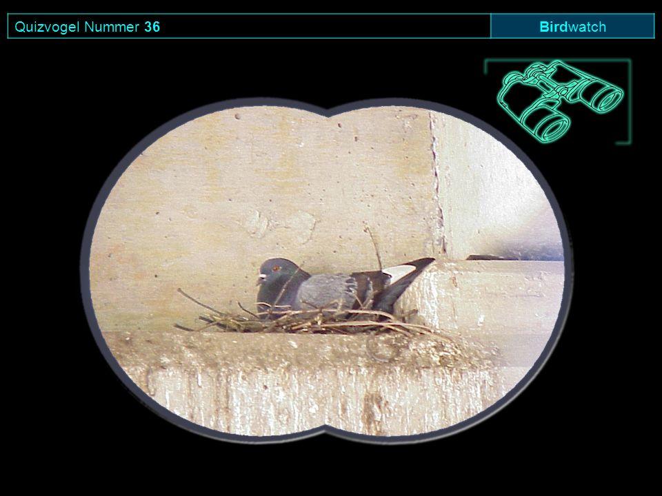 Quizvogel Nummer 36 Birdwatch