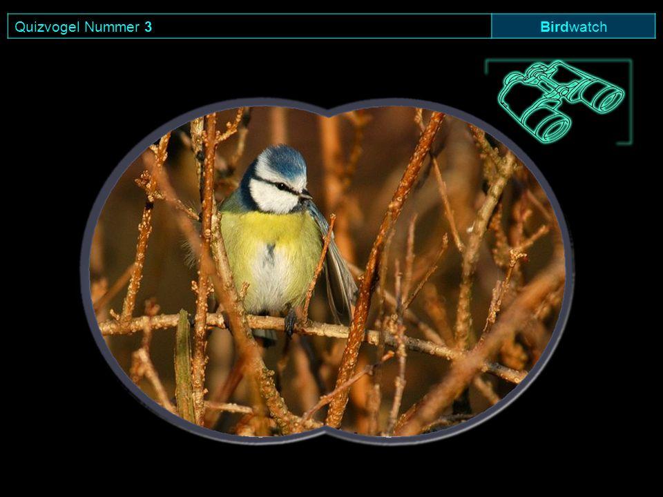 Quizvogel Nummer 3 Birdwatch