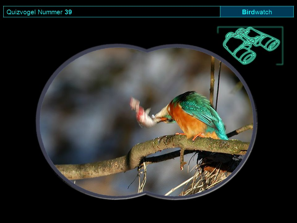 Quizvogel Nummer 39 Birdwatch