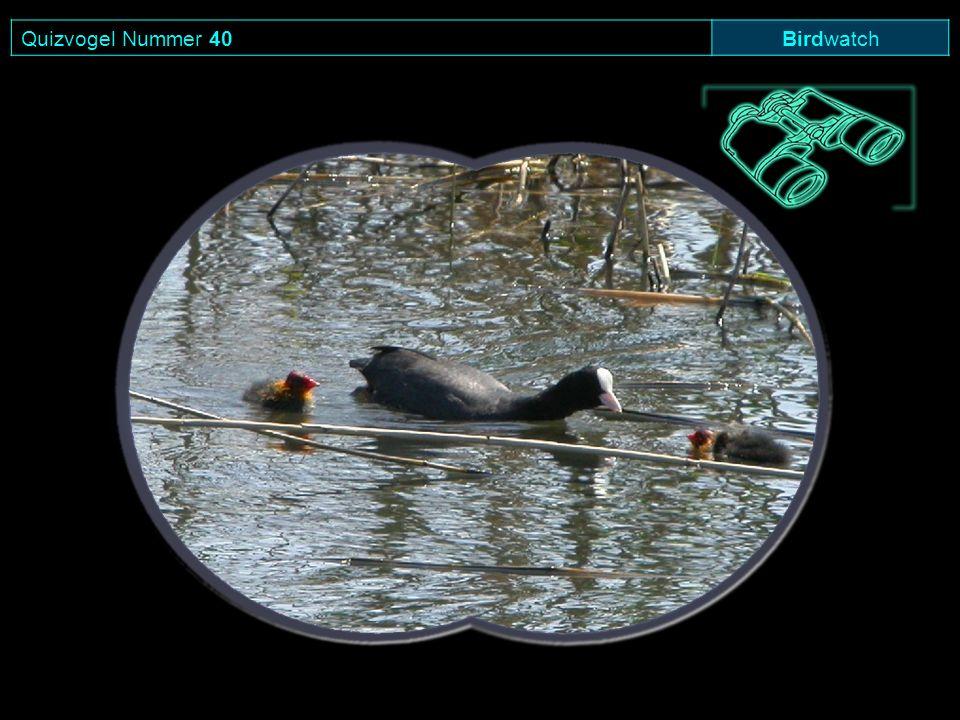 Quizvogel Nummer 40 Birdwatch