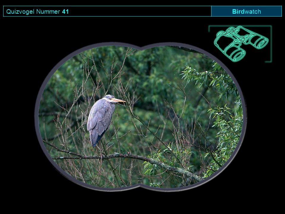 Quizvogel Nummer 41 Birdwatch