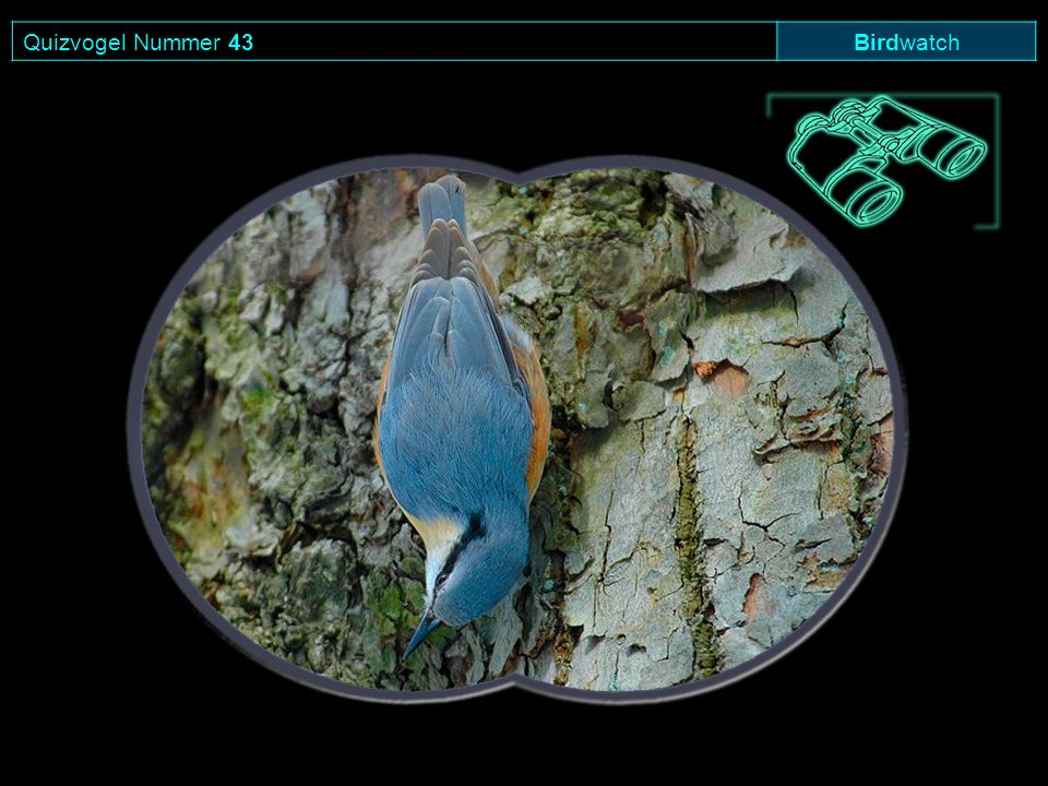 Quizvogel Nummer 43 Birdwatch