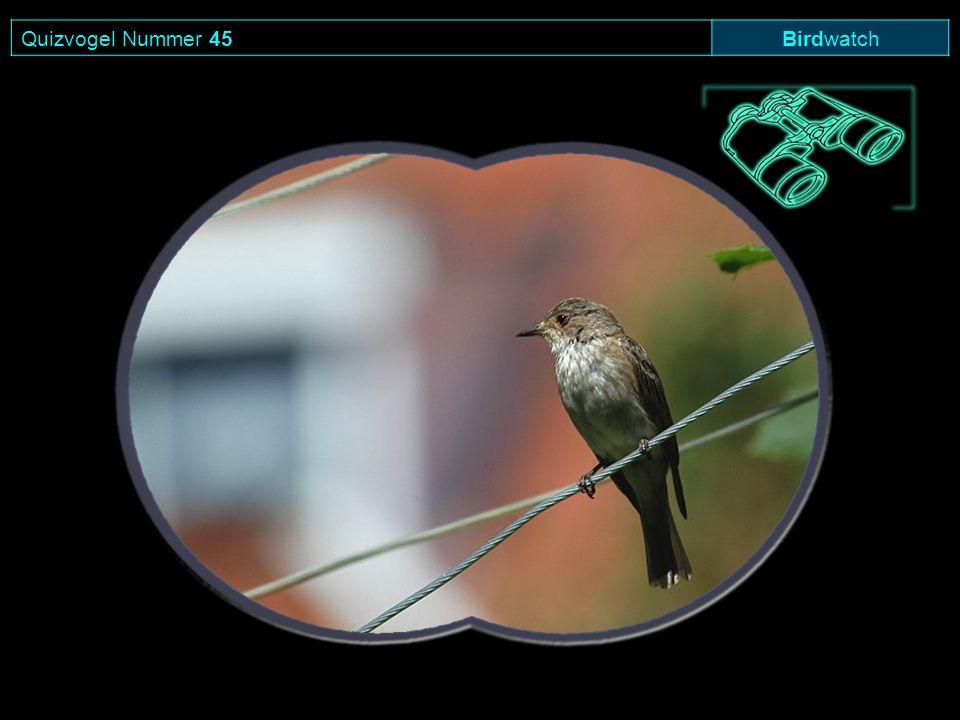 Quizvogel Nummer 45 Birdwatch