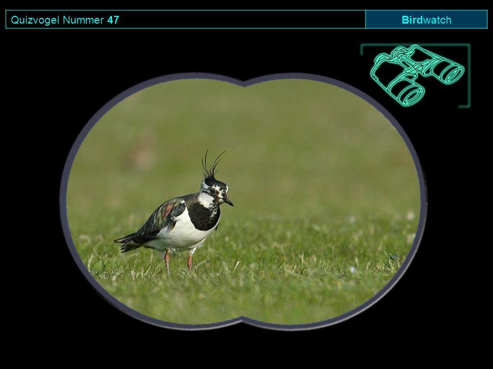 Quizvogel Nummer 47 Birdwatch