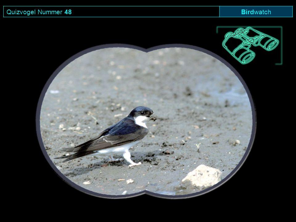 Quizvogel Nummer 48 Birdwatch