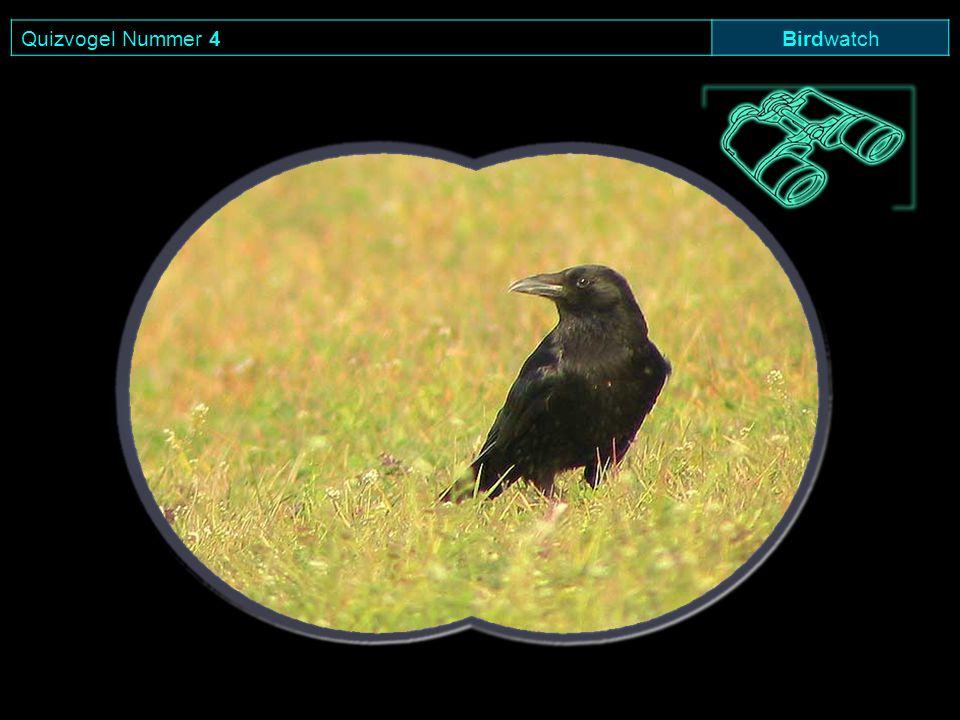 Quizvogel Nummer 4 Birdwatch