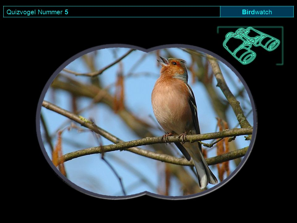 Quizvogel Nummer 5 Birdwatch