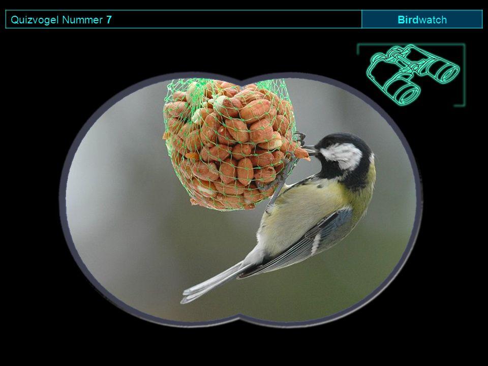 Quizvogel Nummer 7 Birdwatch