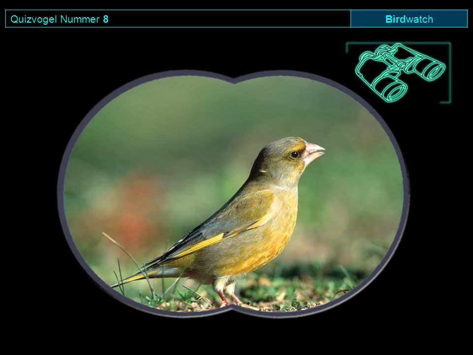 Quizvogel Nummer 8 Birdwatch