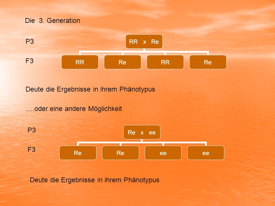 Die 3. Generation P3. F3. Deute die Ergebnisse in ihrem Phänotypus. ….oder eine andere Möglichkeit.