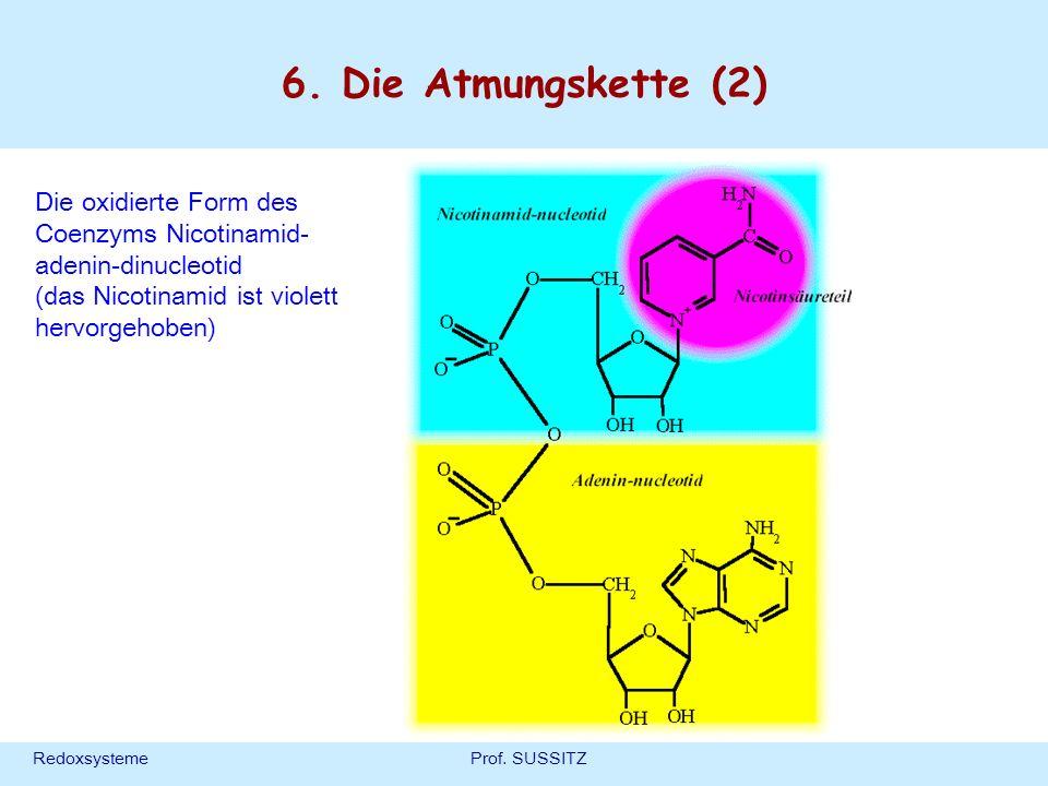 6. Die Atmungskette (2) Die oxidierte Form des Coenzyms Nicotinamid-adenin-dinucleotid. (das Nicotinamid ist violett hervorgehoben)