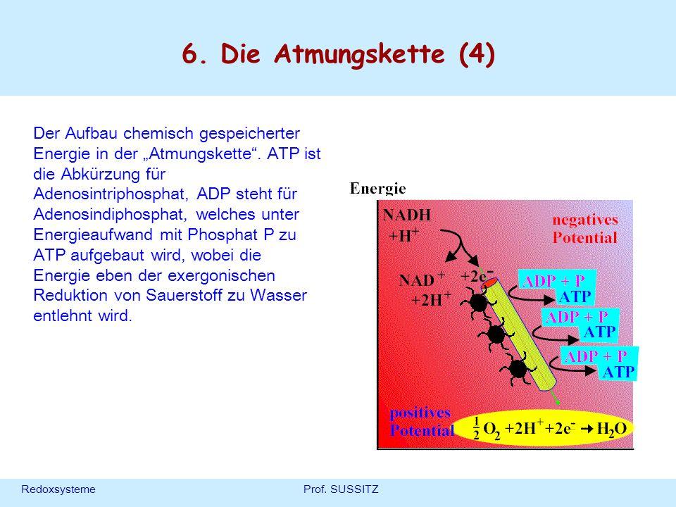 6. Die Atmungskette (4)