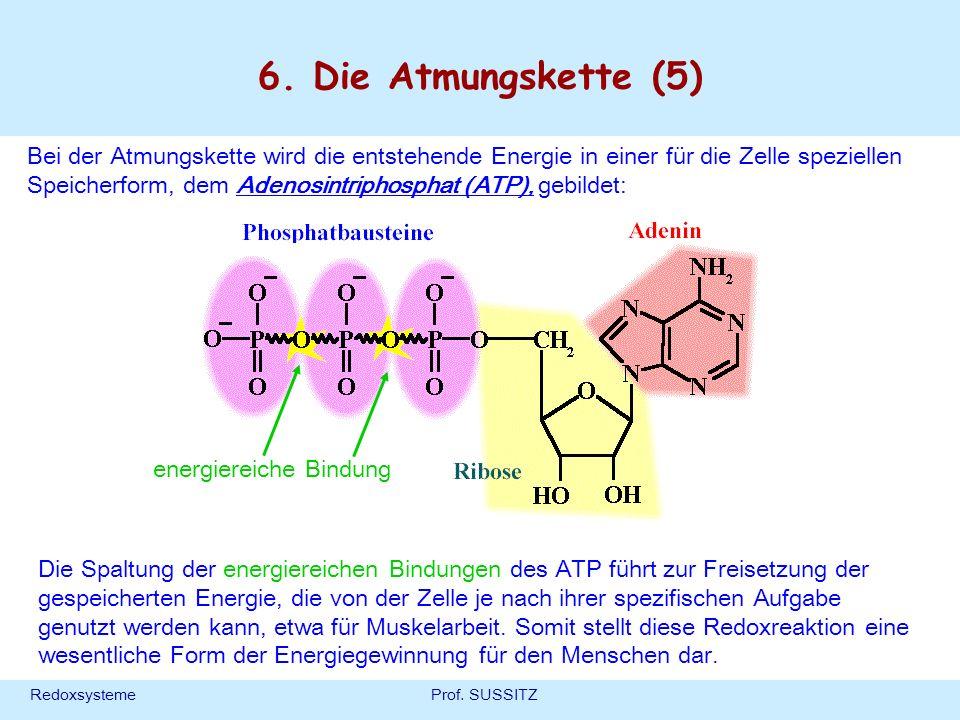 6. Die Atmungskette (5)
