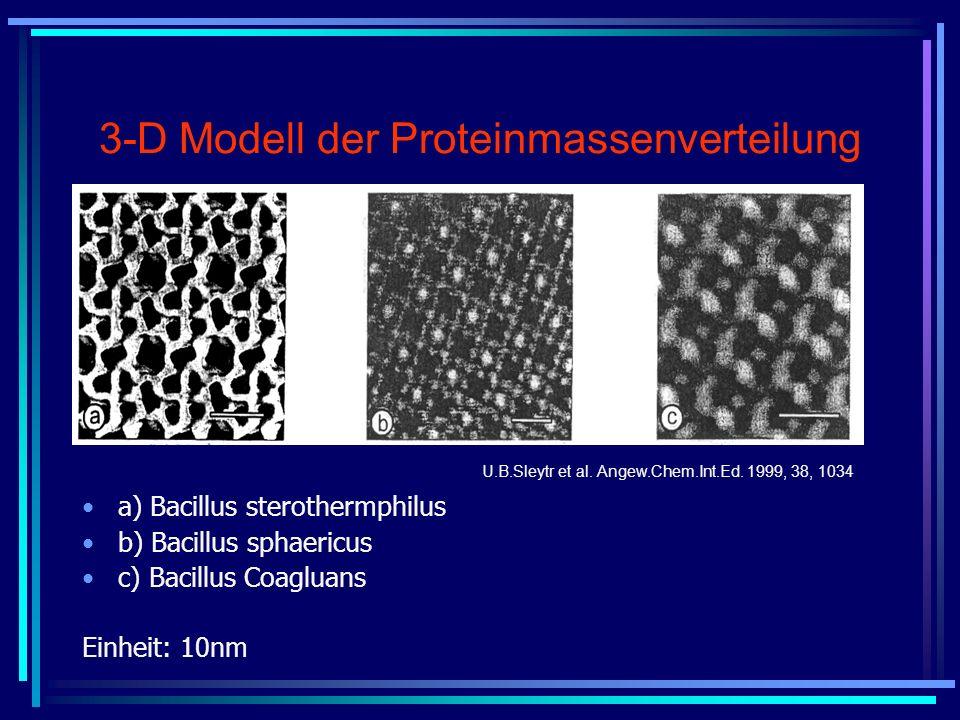 3-D Modell der Proteinmassenverteilung