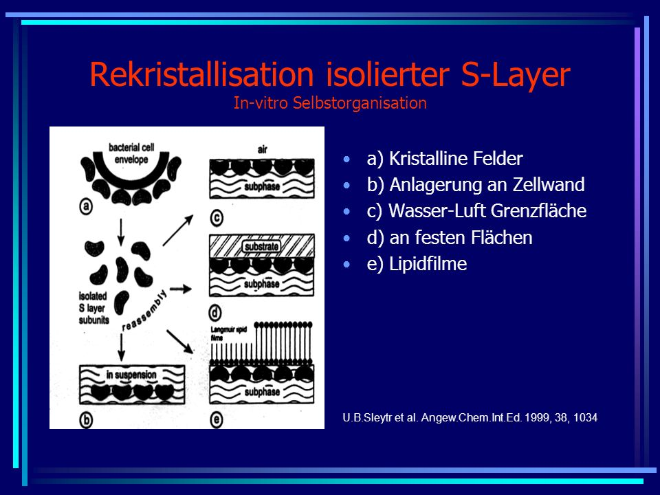 Rekristallisation isolierter S-Layer In-vitro Selbstorganisation
