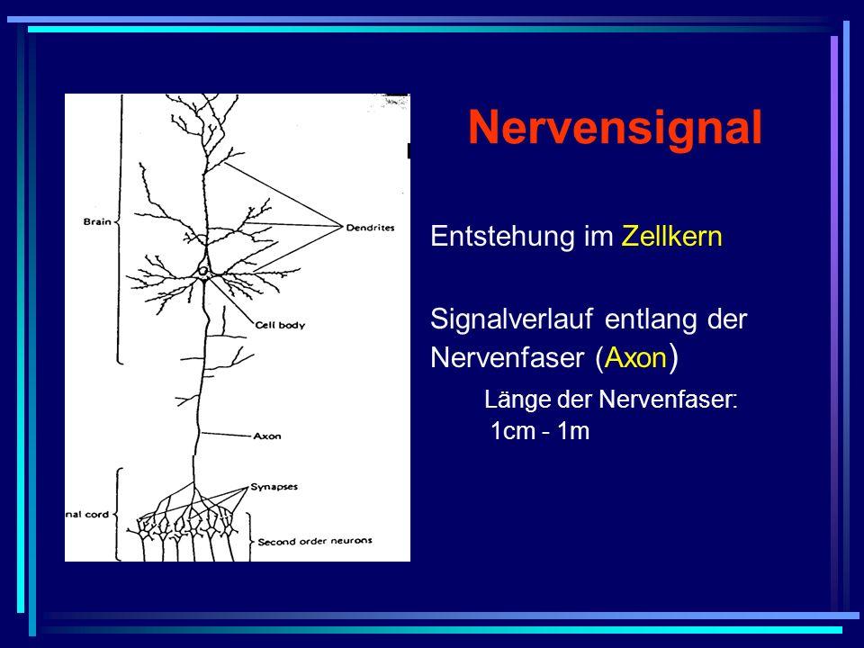 Nervensignal Entstehung im Zellkern