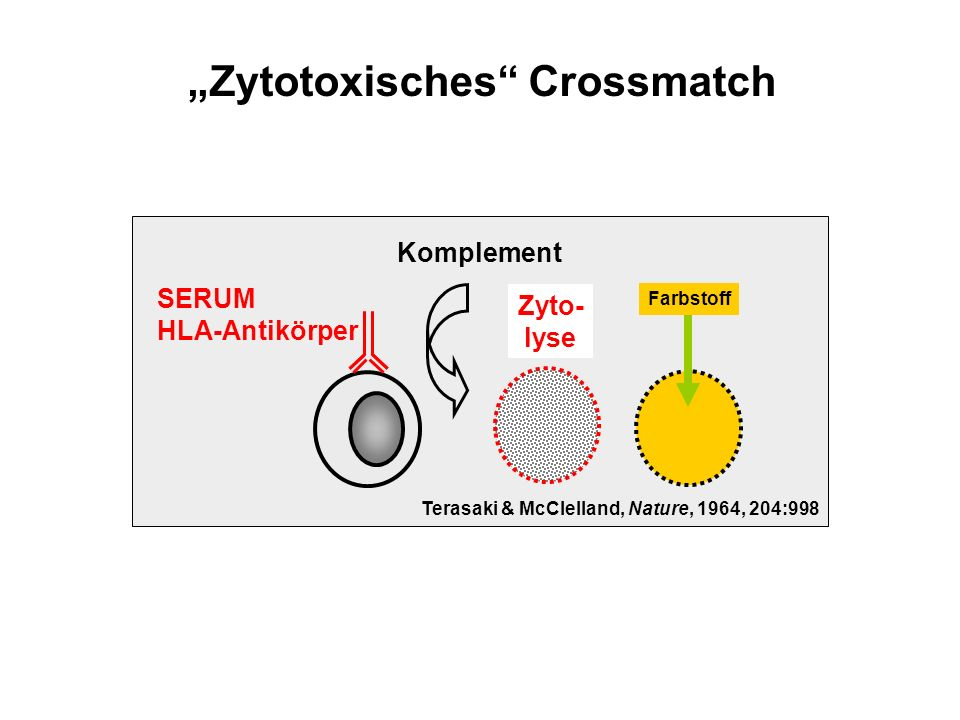"""Zytotoxisches Crossmatch"