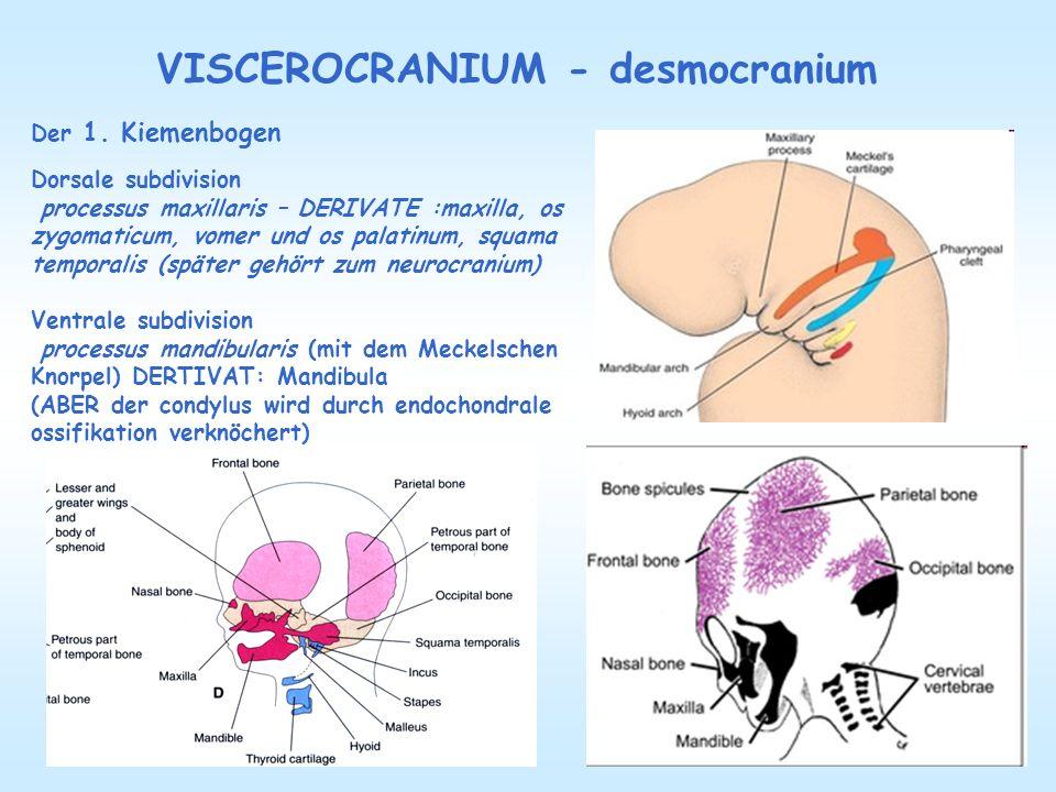 VISCEROCRANIUM - desmocranium