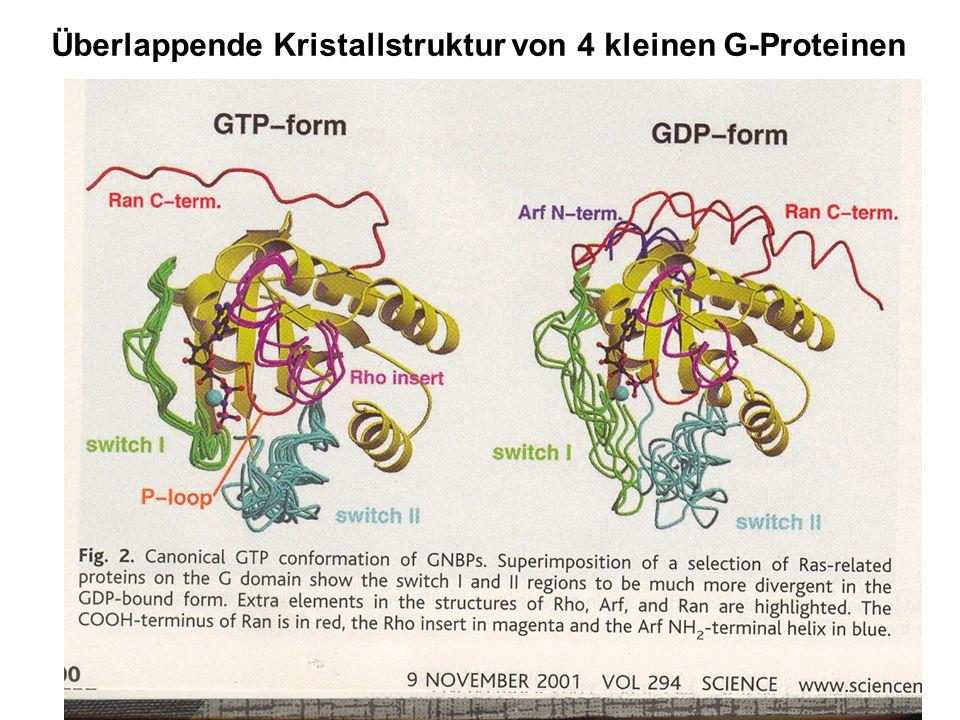 Überlappende Kristallstruktur von 4 kleinen G-Proteinen