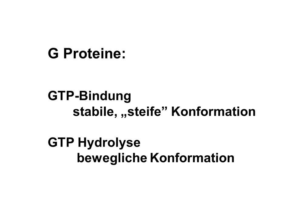 "G Proteine: GTP-Bindung stabile, ""steife Konformation GTP Hydrolyse"