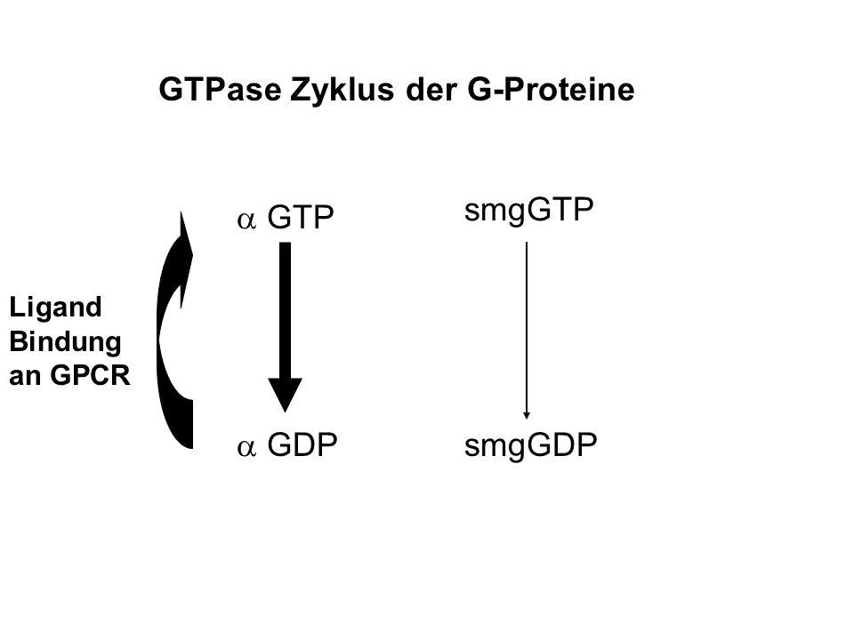 GTPase Zyklus der G-Proteine