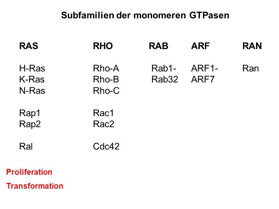Subfamilien der monomeren GTPasen