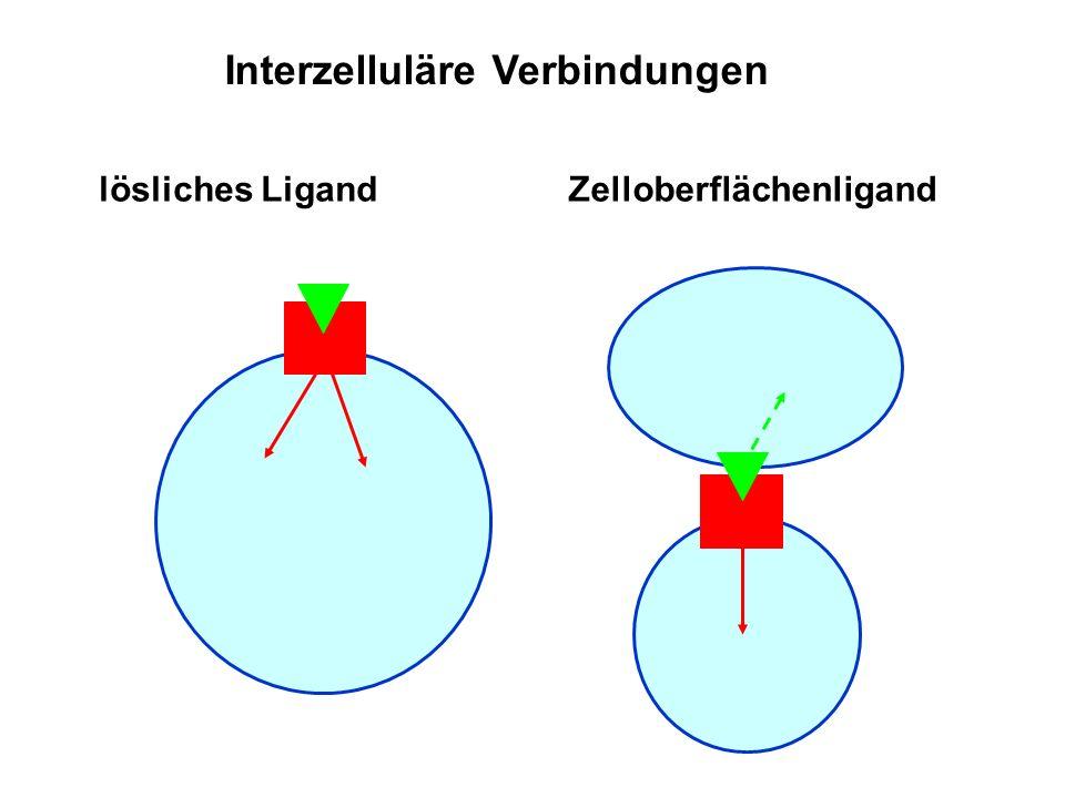 Interzelluläre Verbindungen