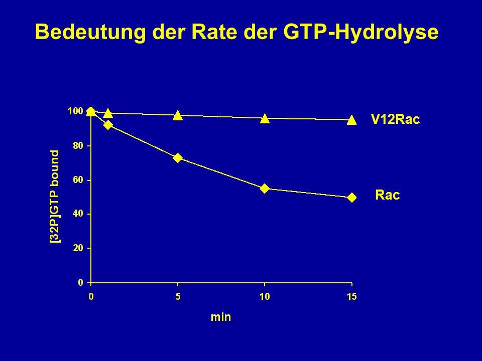 Bedeutung der Rate der GTP-Hydrolyse