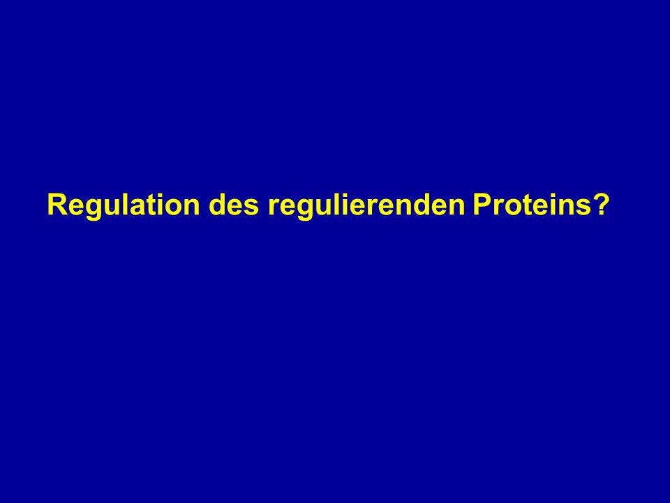 Regulation des regulierenden Proteins