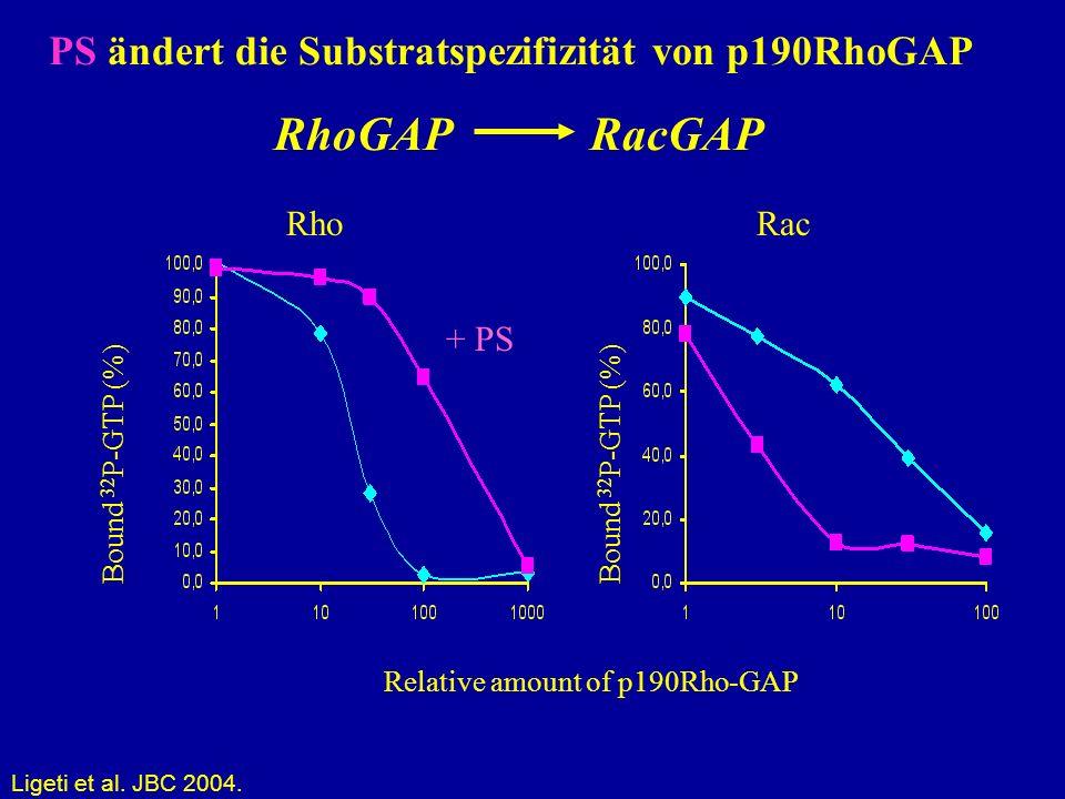 RhoGAP RacGAP PS ändert die Substratspezifizität von p190RhoGAP Rho