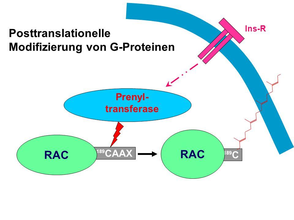 Posttranslationelle Modifizierung von G-Proteinen