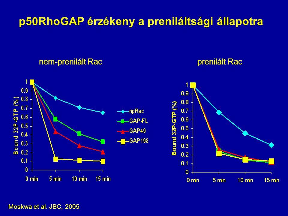 p50RhoGAP érzékeny a preniláltsági állapotra