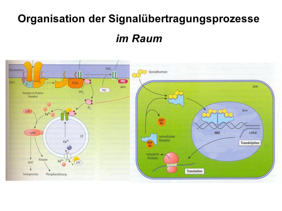 Organisation der Signalübertragungsprozesse