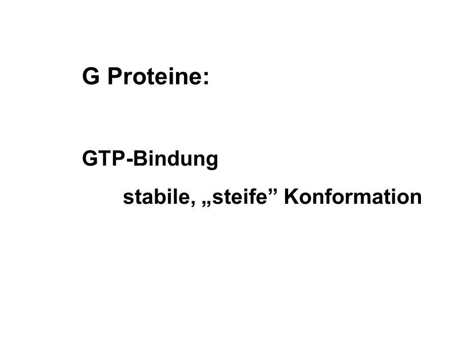 """G Proteine: GTP-Bindung stabile, """"steife Konformation"""