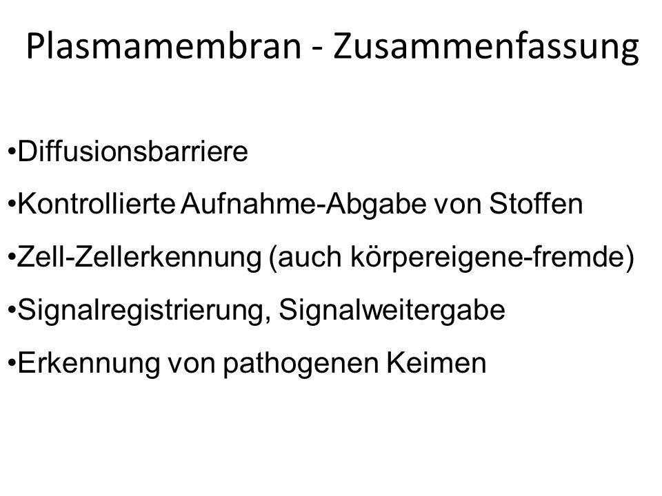 Plasmamembran - Zusammenfassung