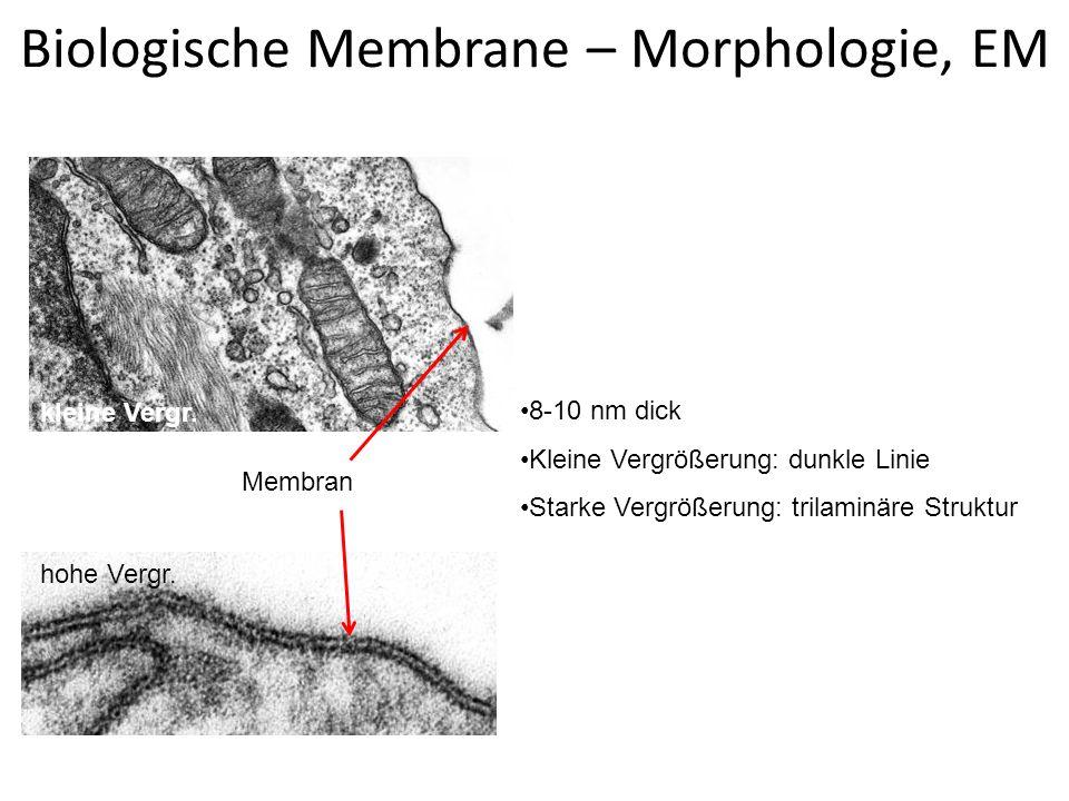 Biologische Membrane – Morphologie, EM