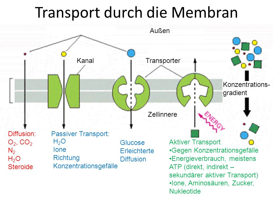 Transport durch die Membran