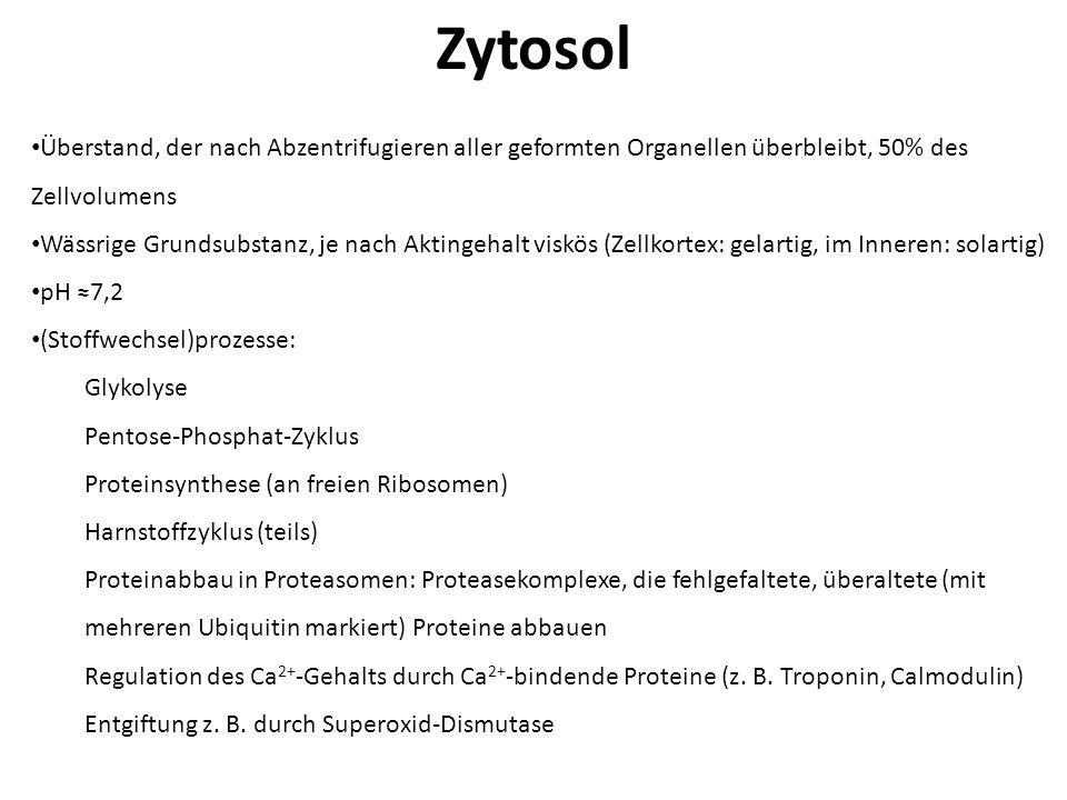 Zytosol Überstand, der nach Abzentrifugieren aller geformten Organellen überbleibt, 50% des Zellvolumens.