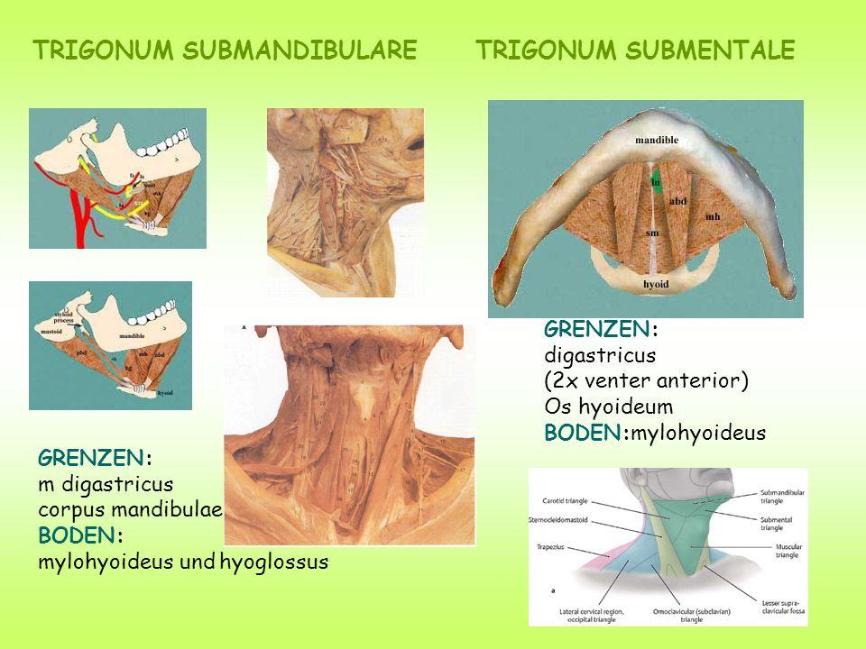 TRIGONUM SUBMANDIBULARE TRIGONUM SUBMENTALE