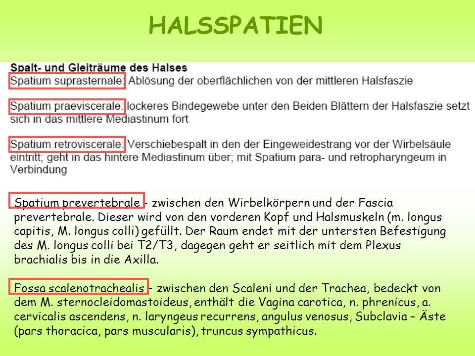 HALSSPATIEN