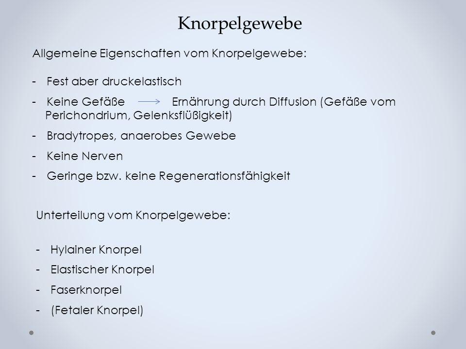 Knorpelgewebe Allgemeine Eigenschaften vom Knorpelgewebe: