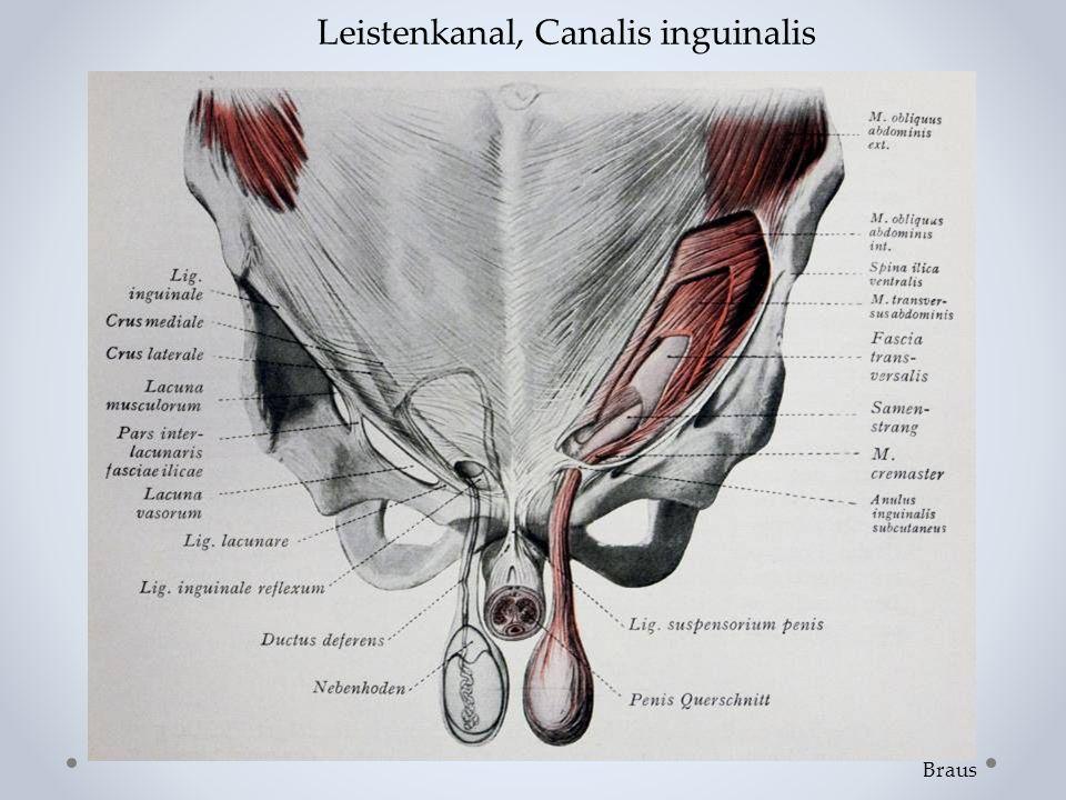 Leistenkanal, Canalis inguinalis