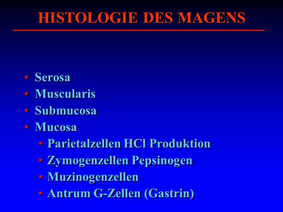 HISTOLOGIE DES MAGENS Serosa Muscularis Submucosa Mucosa