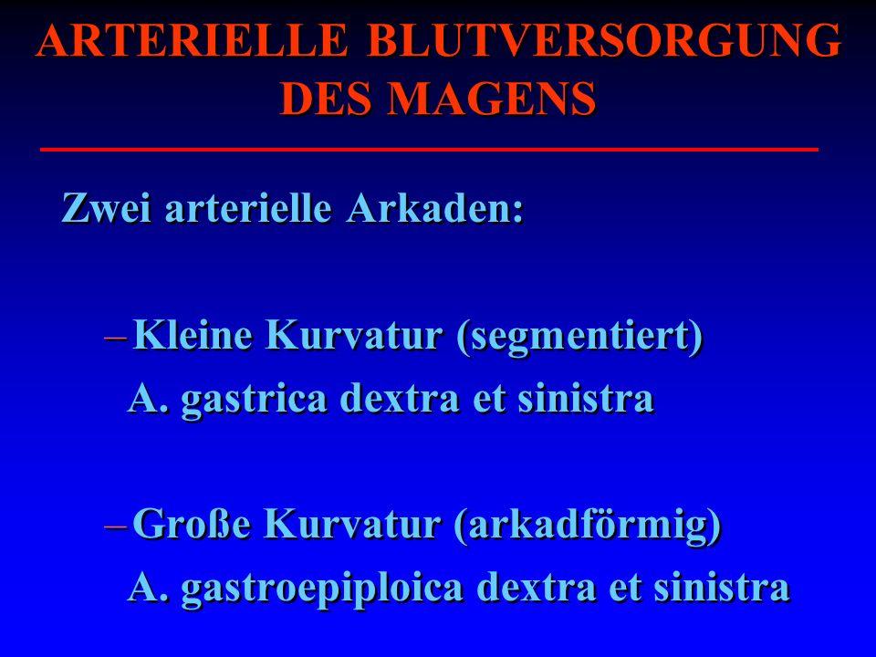 ARTERIELLE BLUTVERSORGUNG DES MAGENS