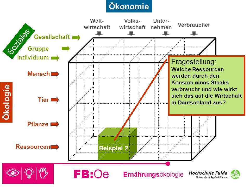Ökonomie Soziales Ökologie Fragestellung: Beispiel 2 Gesellschaft