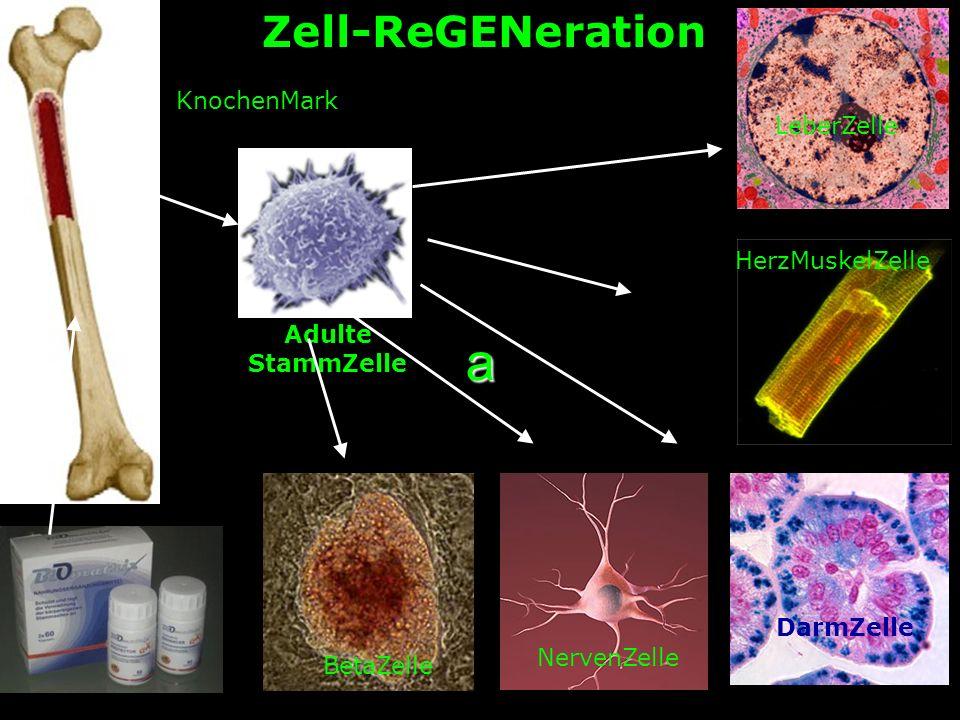 a Zell-ReGENeration KnochenMark LeberZelle HerzMuskelZelle