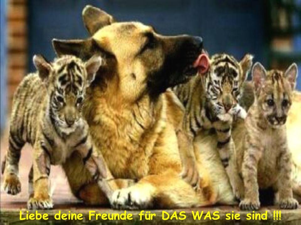 Liebe deine Freunde für DAS WAS sie sind !!!