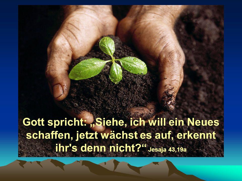 """Gott spricht: """"Siehe, ich will ein Neues schaffen, jetzt wächst es auf, erkennt ihr s denn nicht Jesaja 43,19a"""