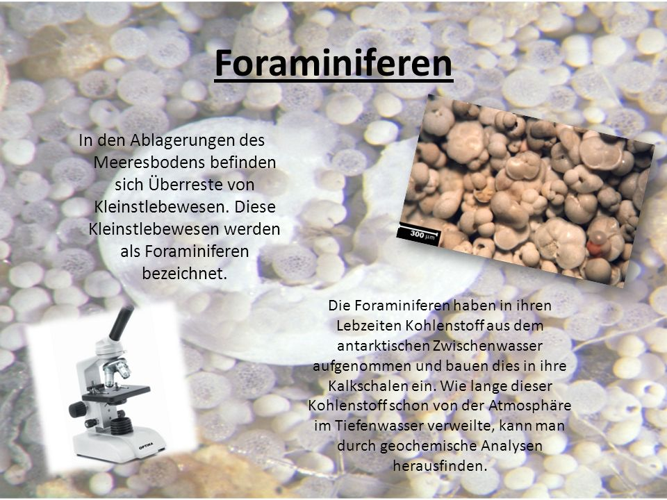 Foraminiferen